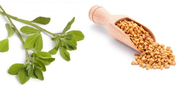 Tempting Reasons to Add Fenugreek to Your Diet