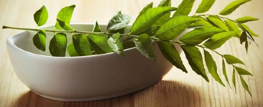 Treating Obesity with Curry Leaves