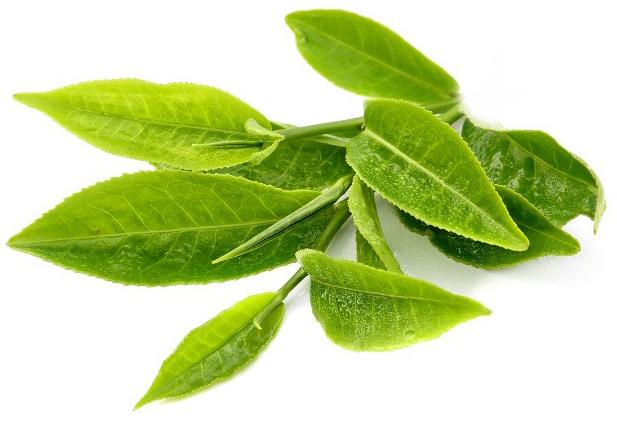 Green Tea for Skin Discoloring