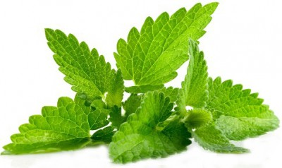 mint to fade acne scars