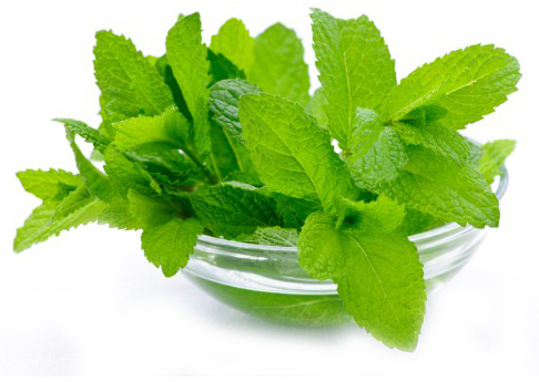 Treating Obesity with Mint